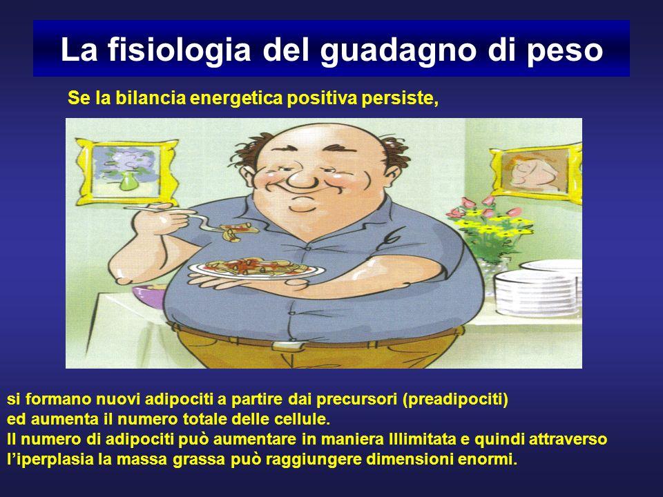 La fisiologia del guadagno di peso si formano nuovi adipociti a partire dai precursori (preadipociti) ed aumenta il numero totale delle cellule.