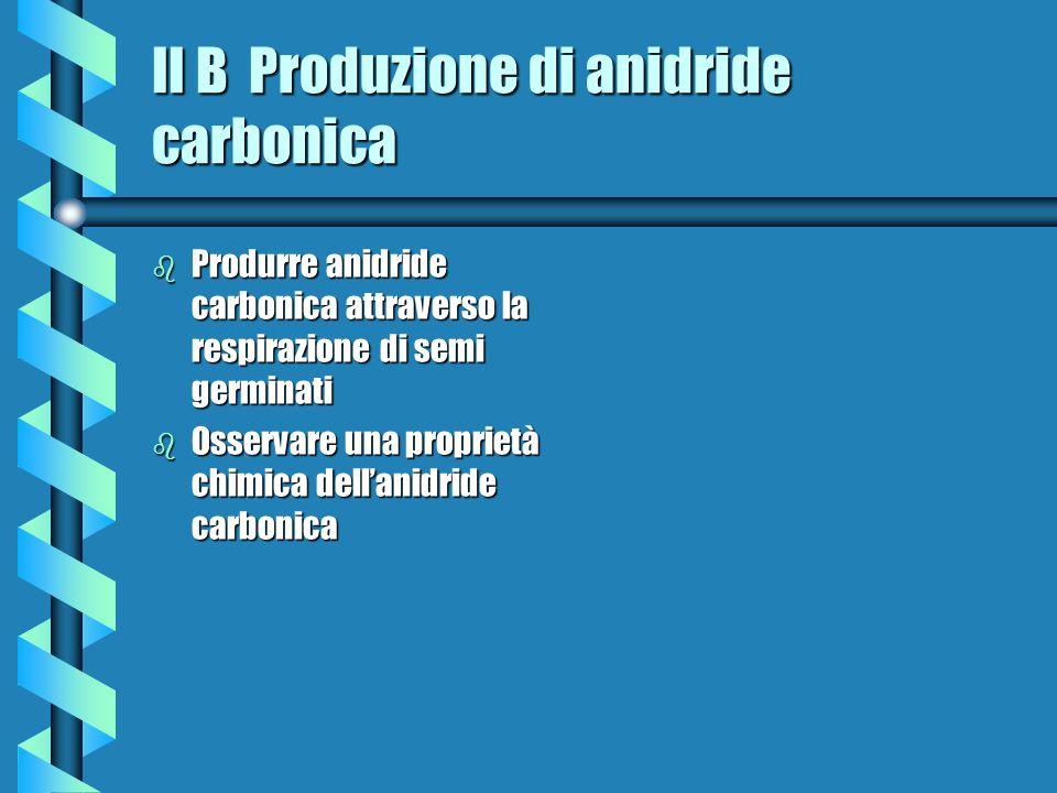 II B Produzione di anidride carbonica b Produrre anidride carbonica attraverso la respirazione di semi germinati b Osservare una proprietà chimica del