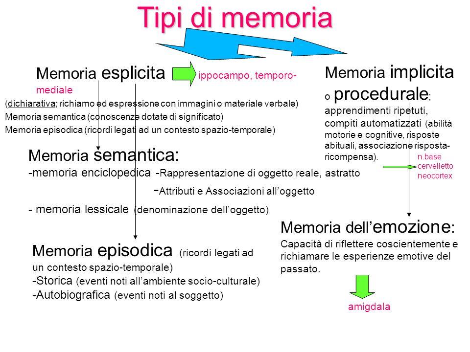Tipi di memoria Memoria esplicita ippocampo, temporo- mediale (dichiarativa; richiamo ed espressione con immagini o materiale verbale) Memoria semanti