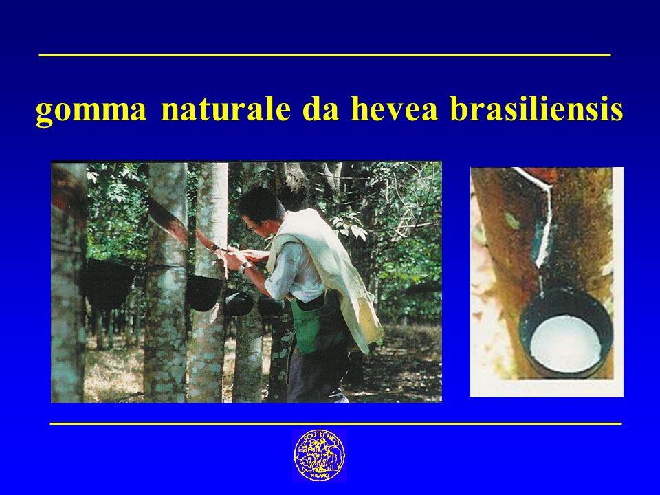 gomma naturale da hevea brasiliensis