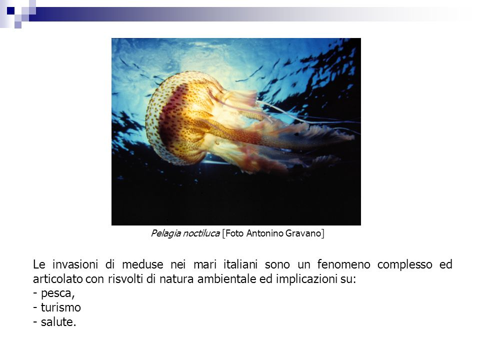 Le invasioni di meduse nei mari italiani sono un fenomeno complesso ed articolato con risvolti di natura ambientale ed implicazioni su: - pesca, - tur