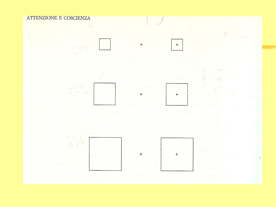 Effetto Navon zNavon (1977) zstimolo: zlettere grandi livello globale zlettere piccole livello locale