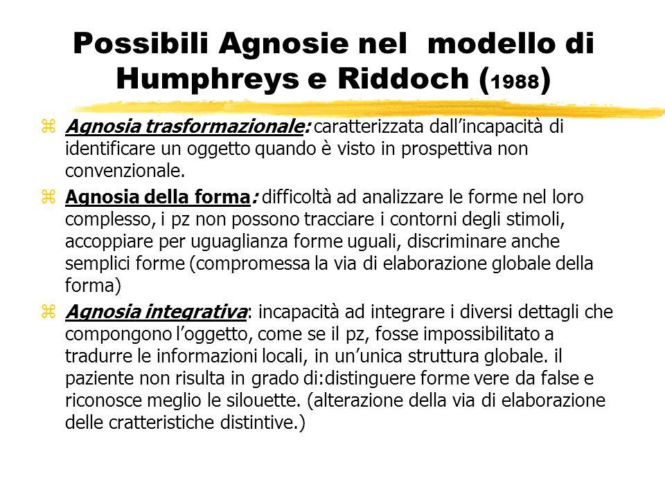 Possibili Agnosie nel modello di Humphreys e Riddoch ( 1988 ) zAgnosia trasformazionale: caratterizzata dallincapacità di identificare un oggetto quan