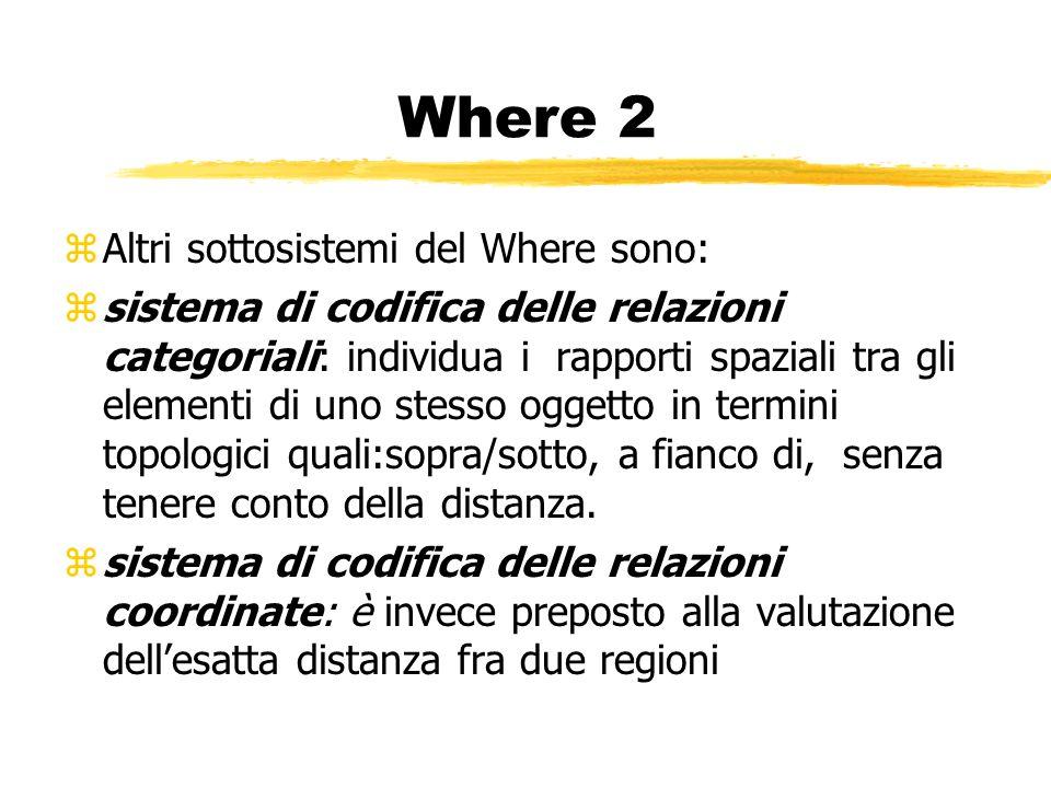 Where 2 zAltri sottosistemi del Where sono: zsistema di codifica delle relazioni categoriali: individua i rapporti spaziali tra gli elementi di uno st