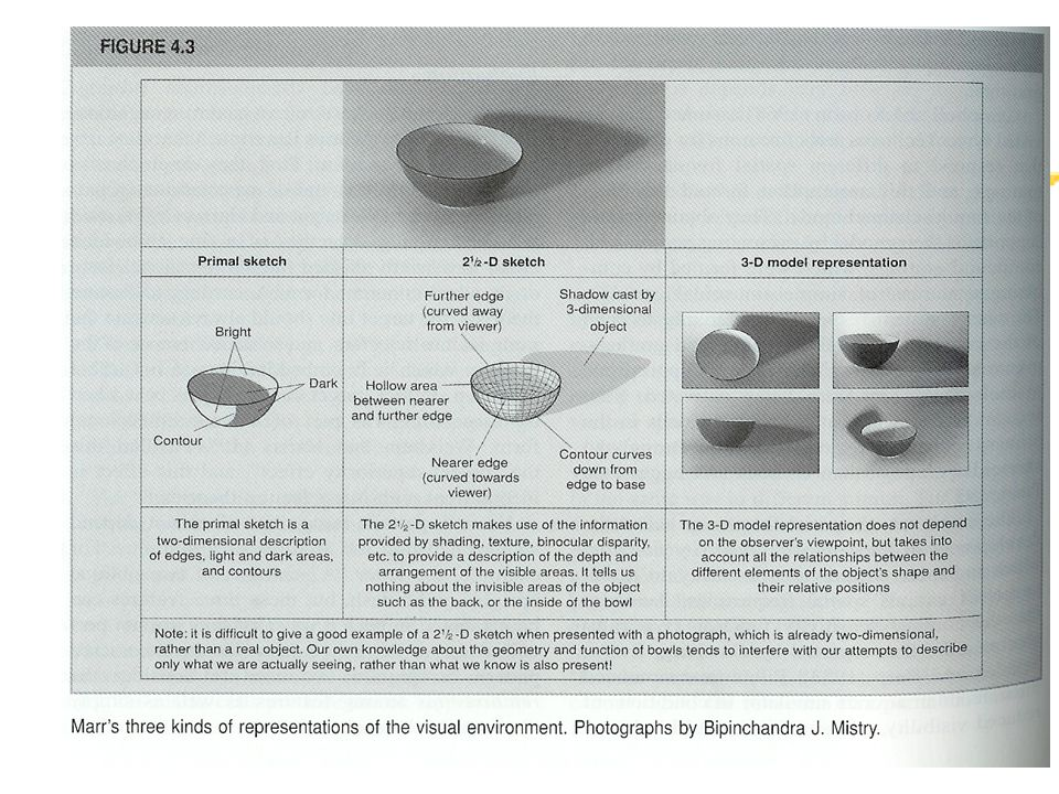 zWhere: via del dove, termina nel lobo parietale inferiore ed è deputata soprattutto allelaborazione spaziale degli stimoli.