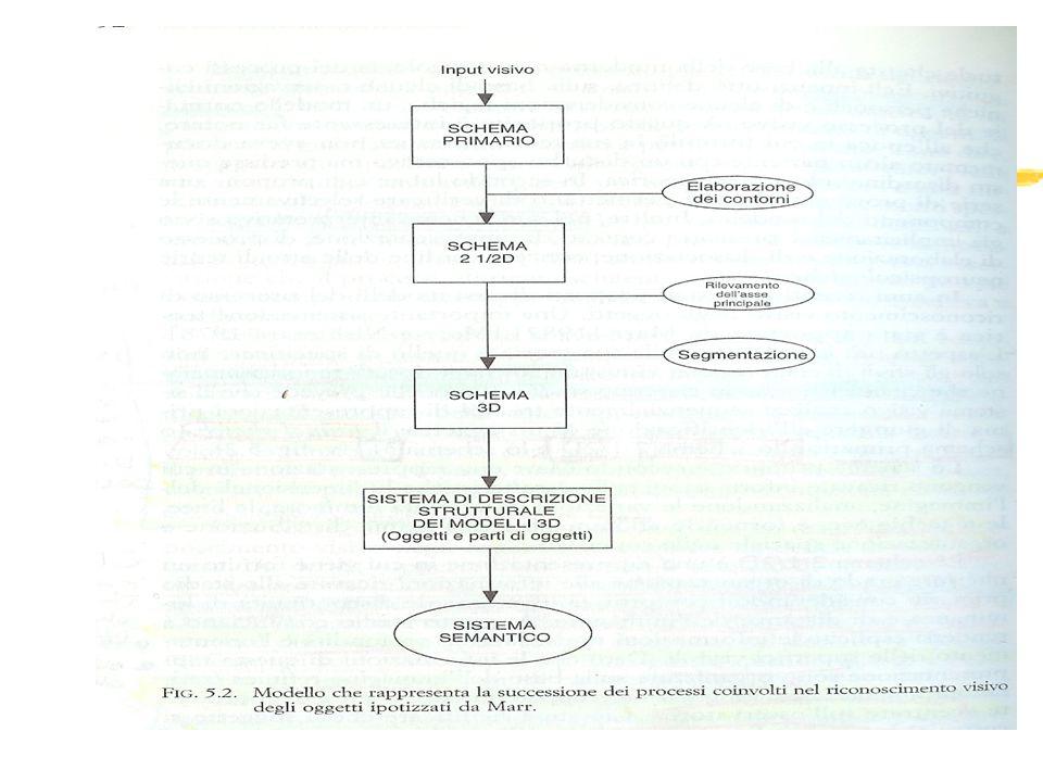 Modello di Humphreys e Riddoch (1984) zVerifica in ambito clinico dellipotesi di Marr (estrazione asse principale come caratteristica fondamentale per riconoscimento oggetti).