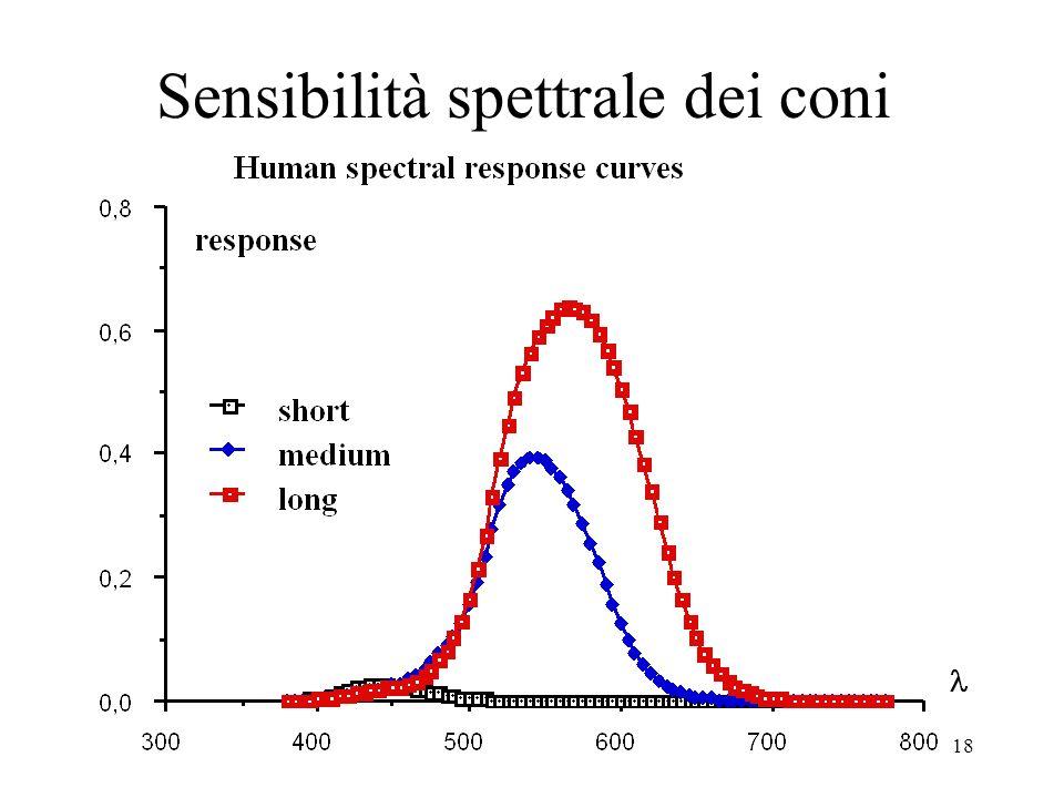 18 Sensibilità spettrale dei coni