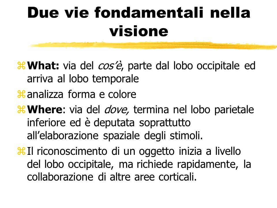 Due vie fondamentali nella visione zWhat: via del cosè, parte dal lobo occipitale ed arriva al lobo temporale zanalizza forma e colore zWhere: via del