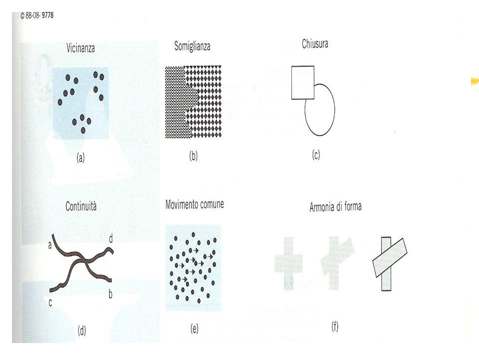 Alcuni fenomeni della percezione zConfigurazioni di stimoli instabili e reversibili zCongiunzioni illusorie: la combinazione di colore e forma