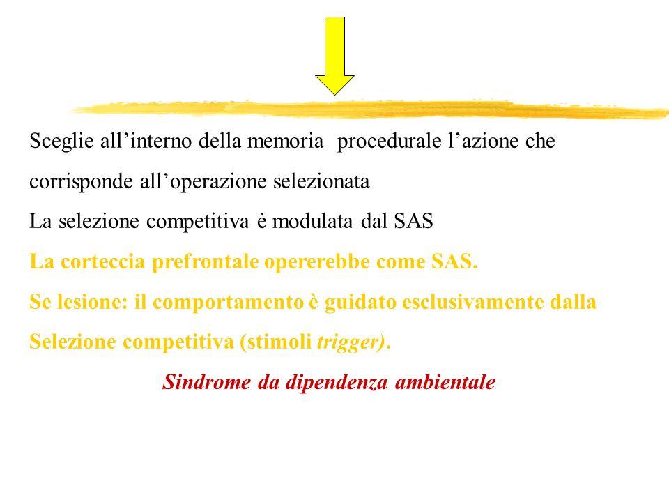 Sceglie allinterno della memoria procedurale lazione che corrisponde alloperazione selezionata La selezione competitiva è modulata dal SAS La cortecci