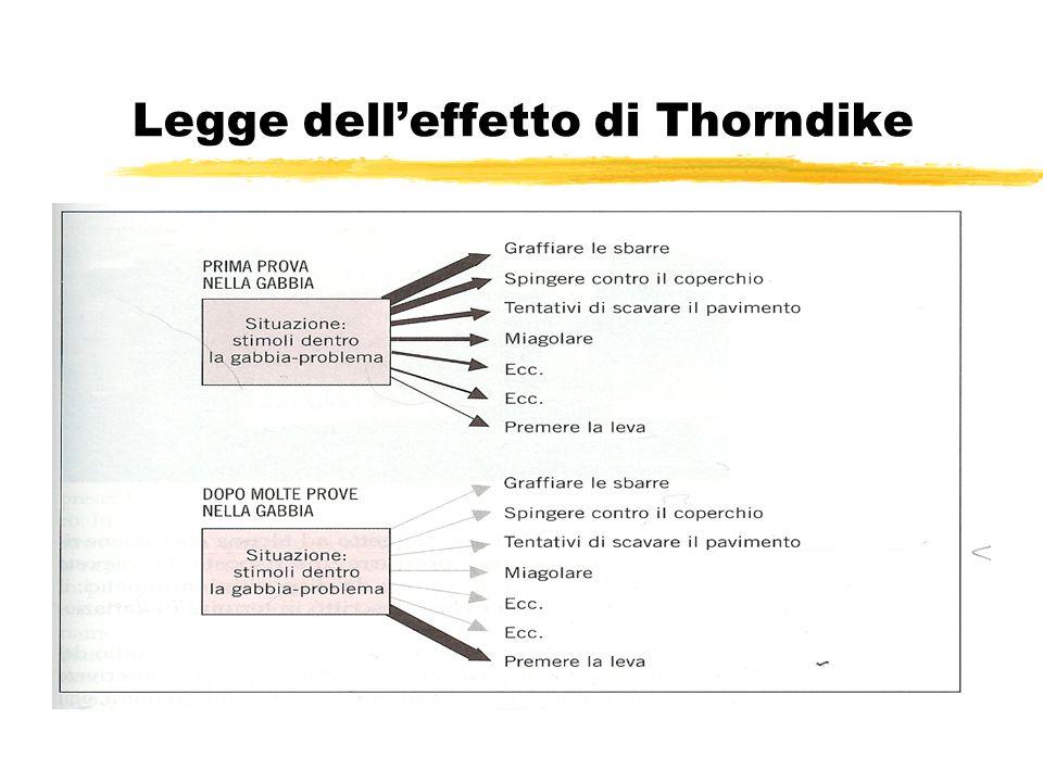 Legge delleffetto di Thorndike