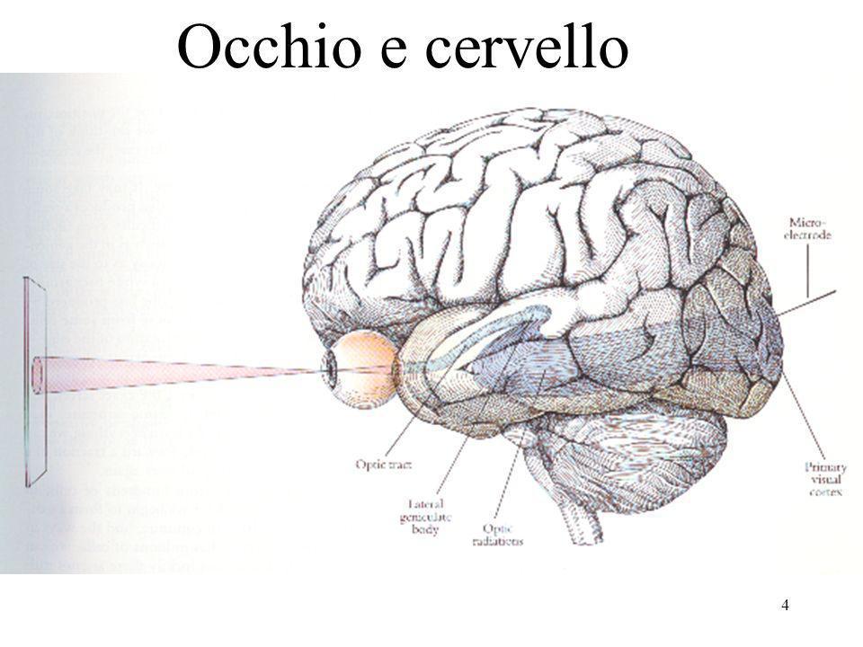 5 Il sistema visivo umano