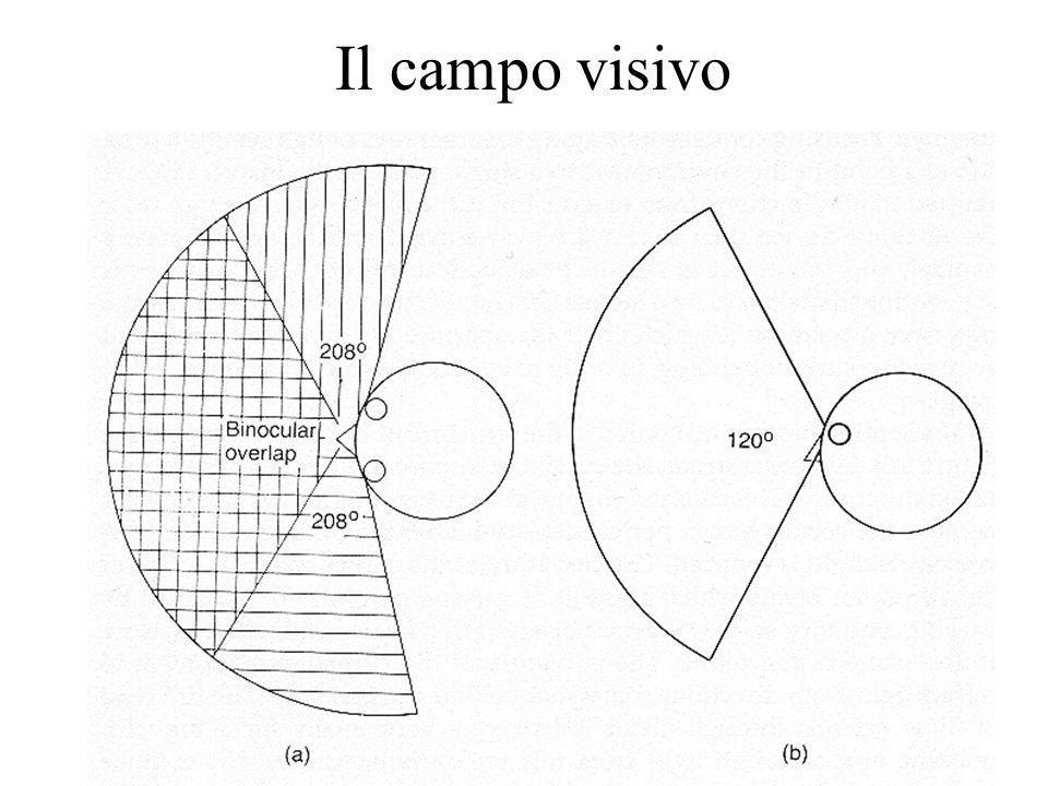 8 Il campo visivo