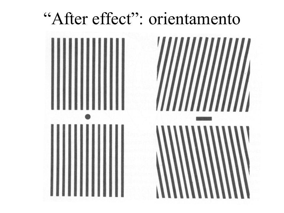 17 After effect: orientamento