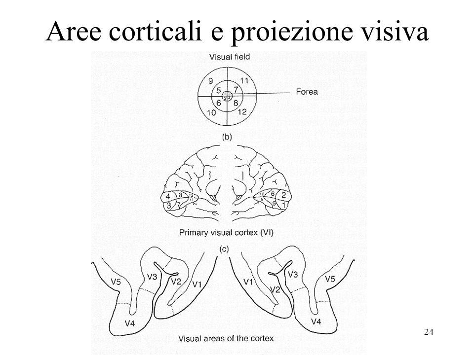 24 Aree corticali e proiezione visiva
