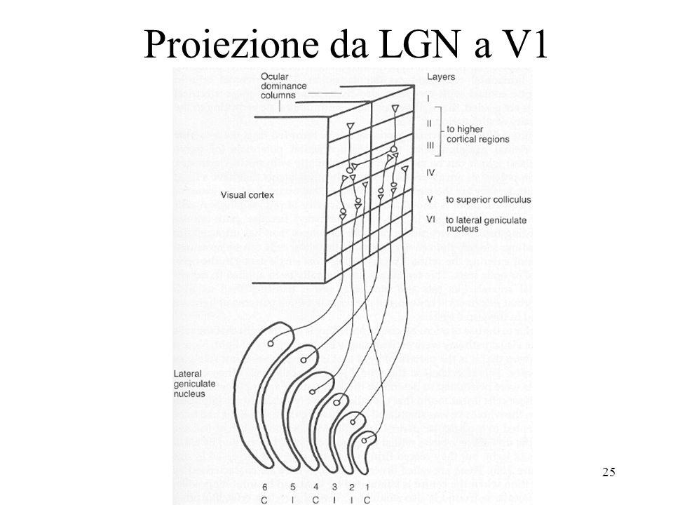 25 Proiezione da LGN a V1