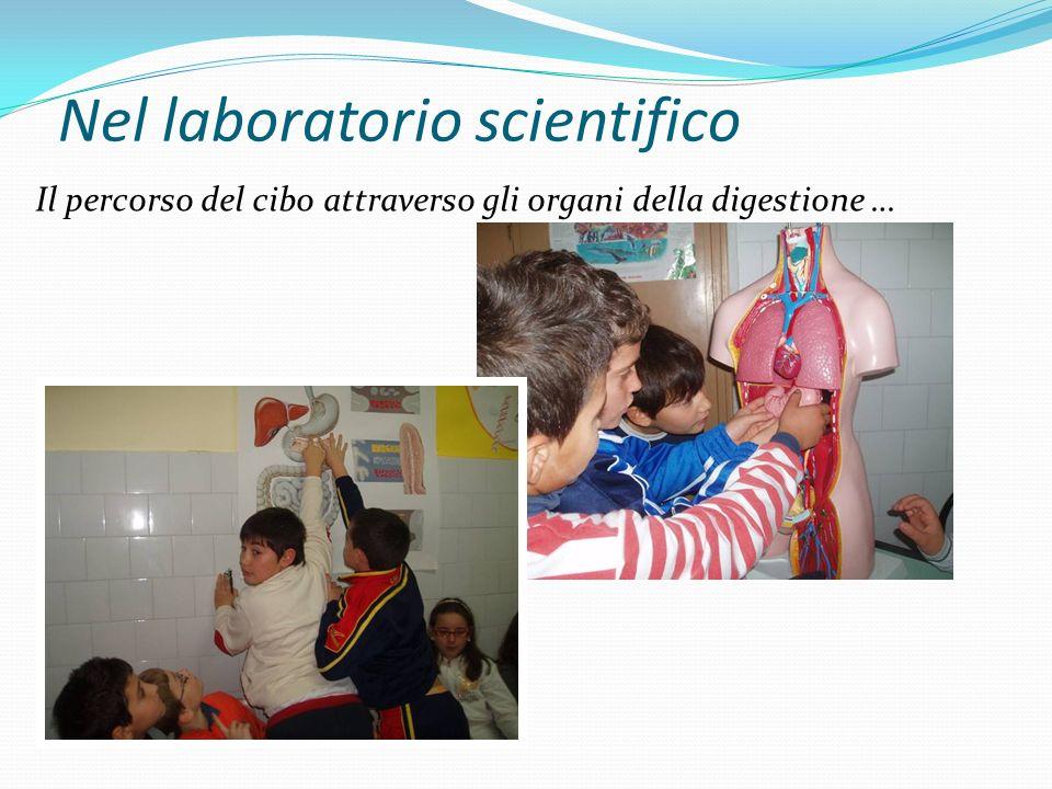 Nel laboratorio scientifico Il percorso del cibo attraverso gli organi della digestione …