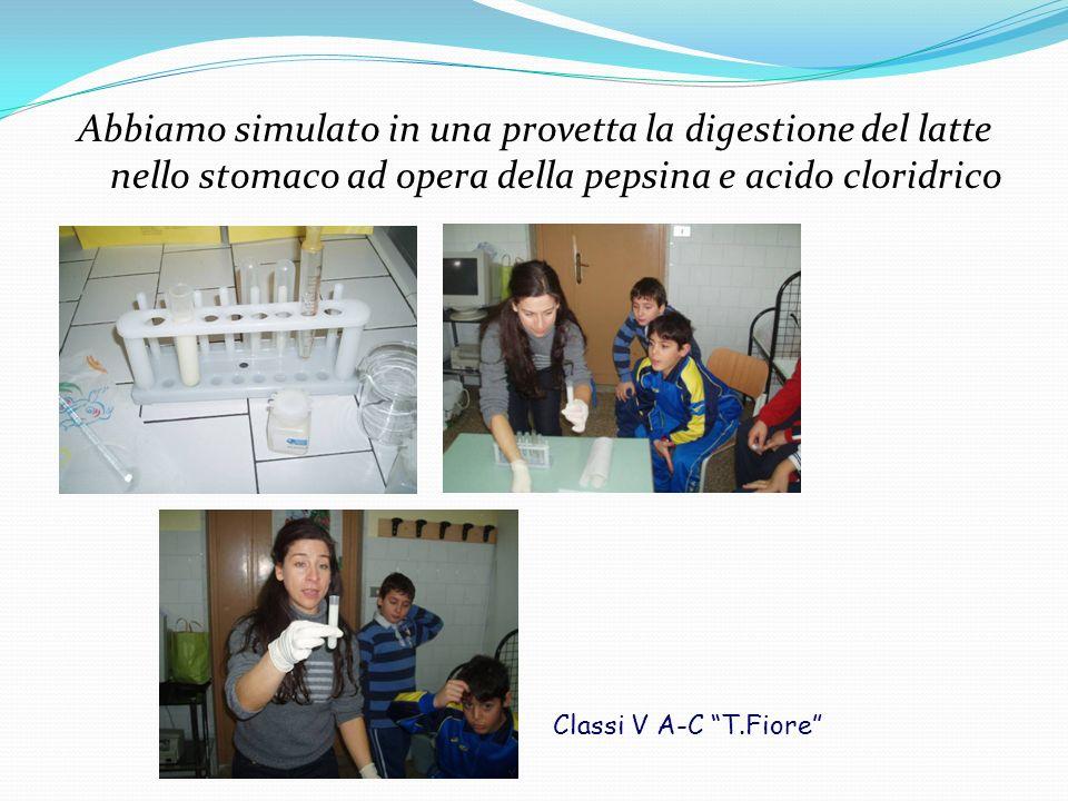 Abbiamo simulato in una provetta la digestione del latte nello stomaco ad opera della pepsina e acido cloridrico Classi V A-C T.Fiore