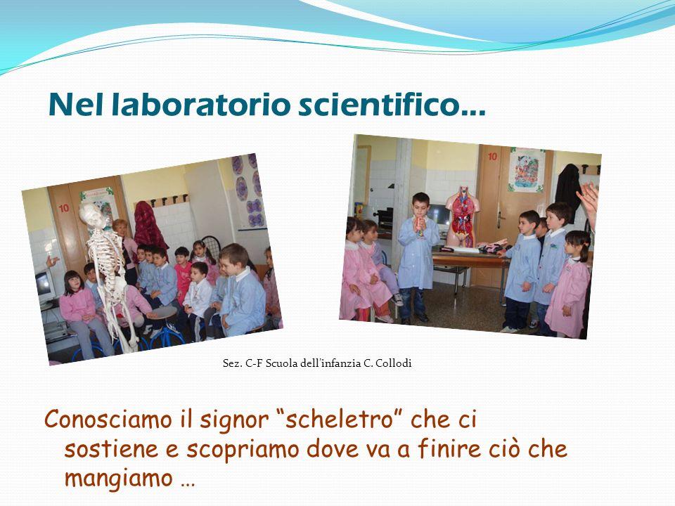 Nel laboratorio scientifico... Conosciamo il signor scheletro che ci sostiene e scopriamo dove va a finire ciò che mangiamo … Sez. C-F Scuola dellinfa