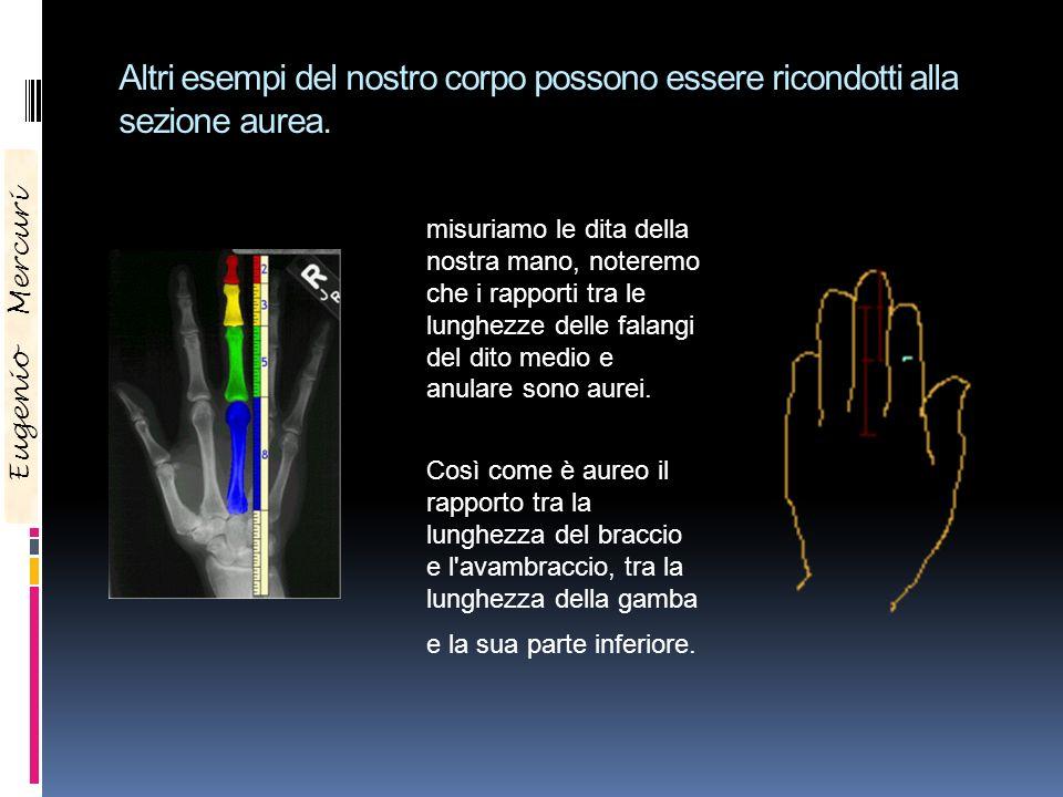 Eugenio Mercuri Altri esempi del nostro corpo possono essere ricondotti alla sezione aurea. Se misuriamo le dita della nostra mano, noteremo che i rap