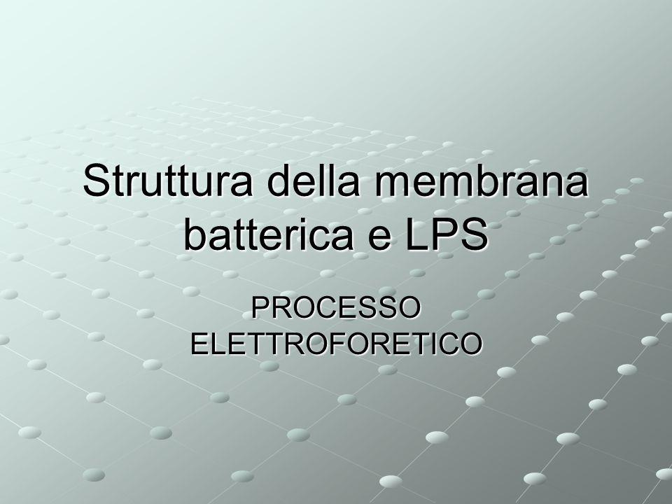 Struttura della membrana batterica e LPS PROCESSO ELETTROFORETICO