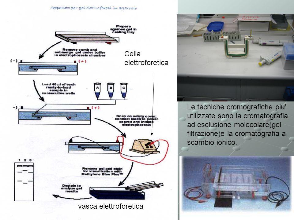 vasca elettroforetica Le tecniche cromografiche piu utilizzate sono la cromatografia ad esclusione molecolare(gel filtrazione)e la cromatografia a scambio ionico.