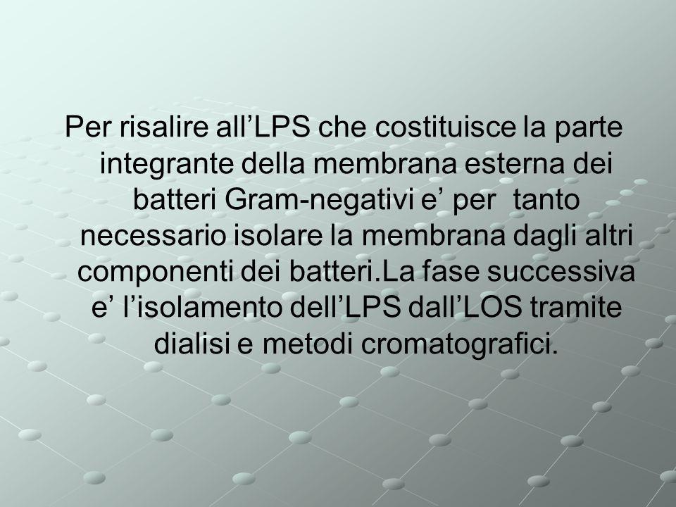 Per risalire allLPS che costituisce la parte integrante della membrana esterna dei batteri Gram-negativi e per tanto necessario isolare la membrana dagli altri componenti dei batteri.La fase successiva e lisolamento dellLPS dallLOS tramite dialisi e metodi cromatografici.