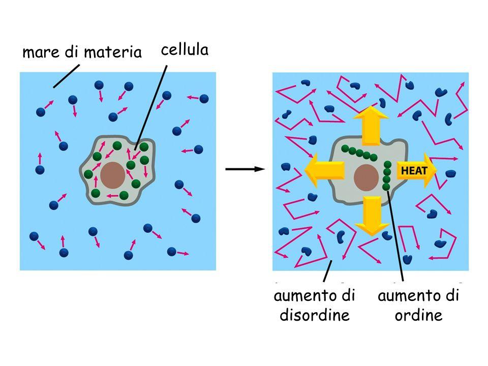 mare di materia cellula aumento di disordine aumento di ordine