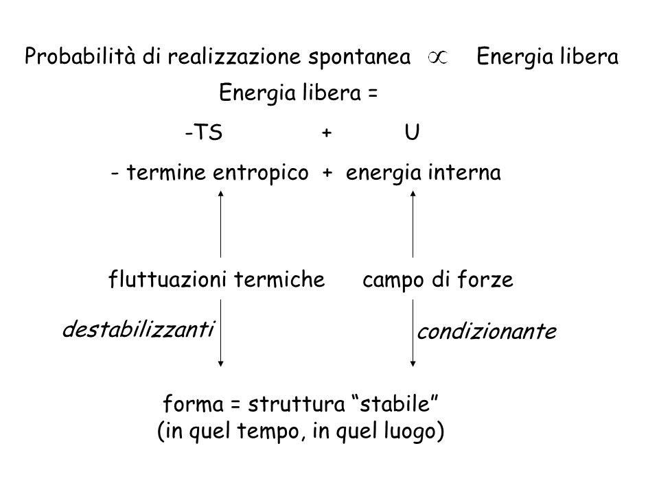 Probabilità di realizzazione spontaneaEnergia libera Energia libera = -TS + U - termine entropico + energia interna fluttuazioni termichecampo di forz