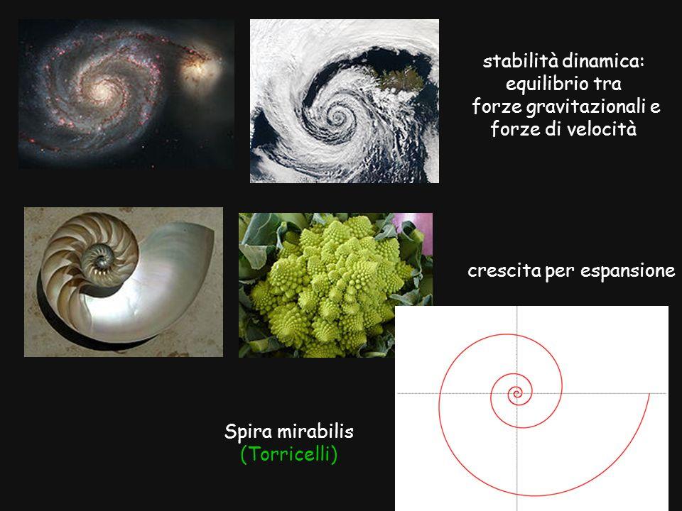 Spira mirabilis (Torricelli) stabilità dinamica: equilibrio tra forze gravitazionali e forze di velocità crescita per espansione