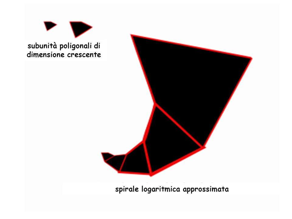 subunità poligonali di dimensione crescente spirale logaritmica approssimata