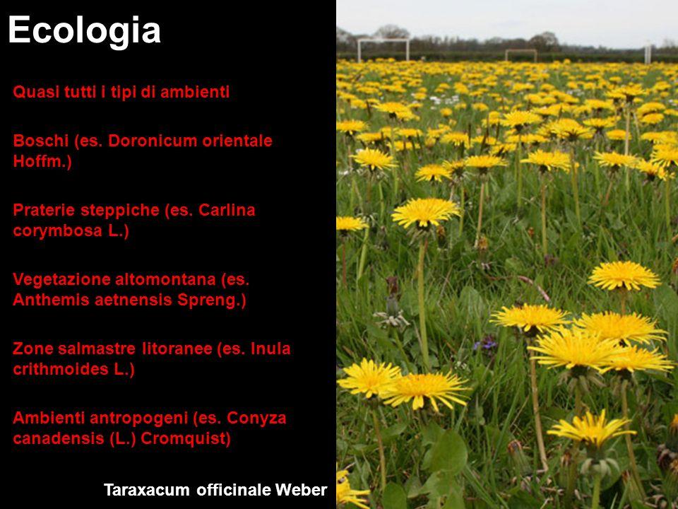 Ecologia Quasi tutti i tipi di ambienti Boschi (es. Doronicum orientale Hoffm.) Praterie steppiche (es. Carlina corymbosa L.) Vegetazione altomontana