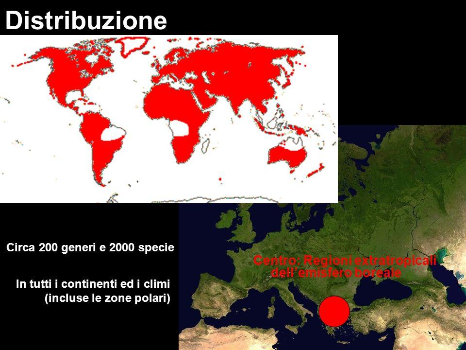 Uso Cucina: es.cavolo nero (Brassica oleracea L.), ravizzone (Brassica rapa L.
