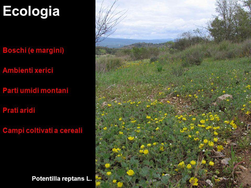 Ecologia Boschi (e margini) Ambienti xerici Parti umidi montani Prati aridi Campi coltivati a cereali Potentilla reptans L.