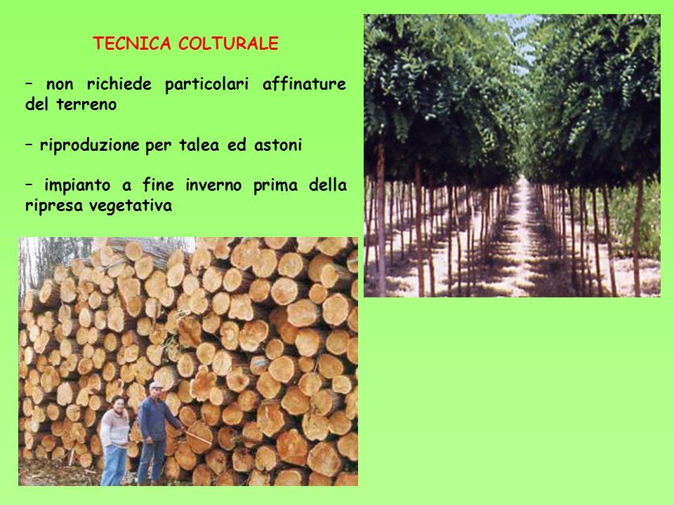 TECNICA COLTURALE – non richiede particolari affinature del terreno – riproduzione per talea ed astoni – impianto a fine inverno prima della ripresa v