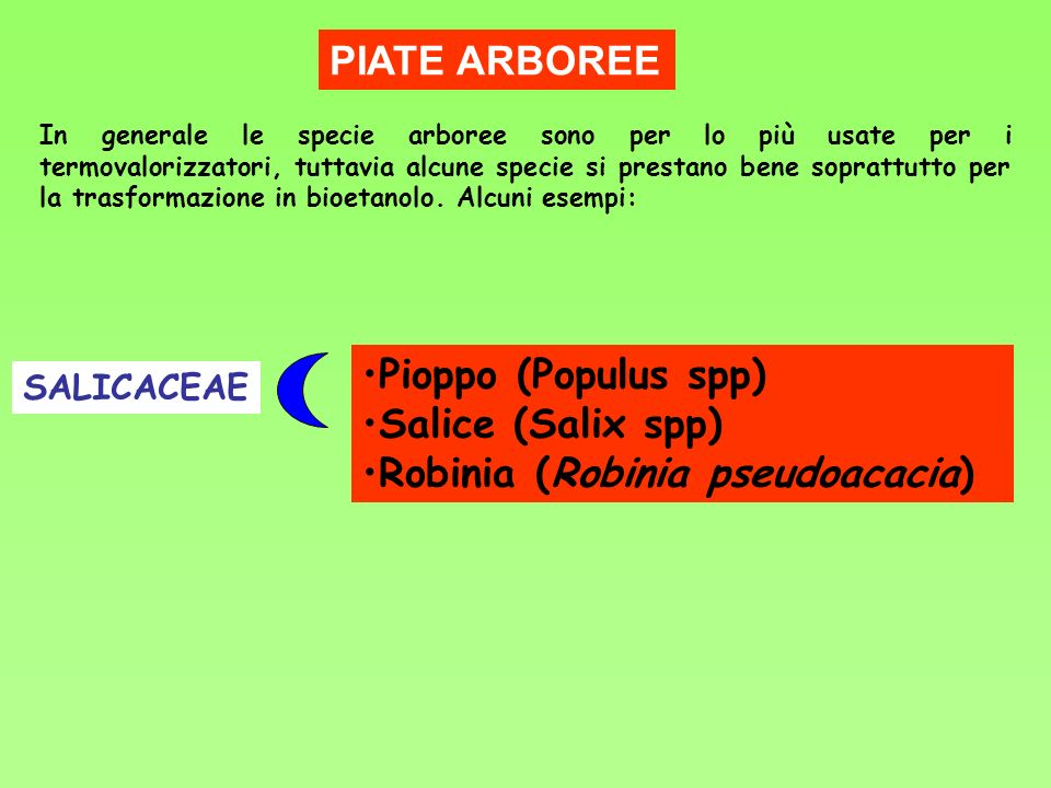 PIATE ARBOREE Pioppo (Populus spp) Salice (Salix spp) Robinia (Robinia pseudoacacia) In generale le specie arboree sono per lo più usate per i termova