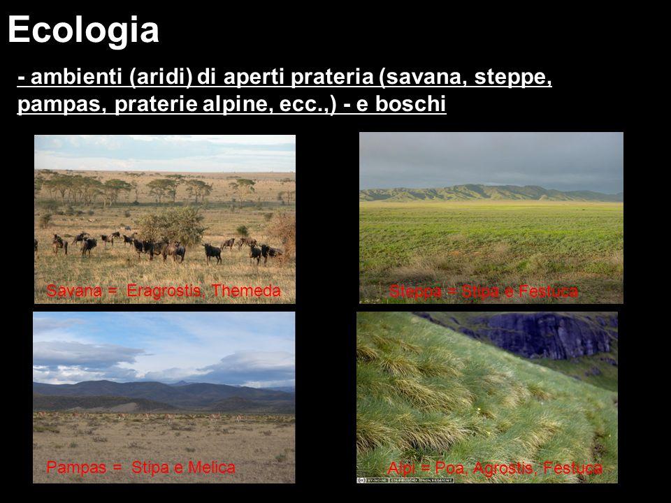 Ecologia - ambienti (aridi) di aperti prateria (savana, steppe, pampas, praterie alpine, ecc.,) - e boschi Steppa = Stipa e Festuca Alpi = Poa, Agrost
