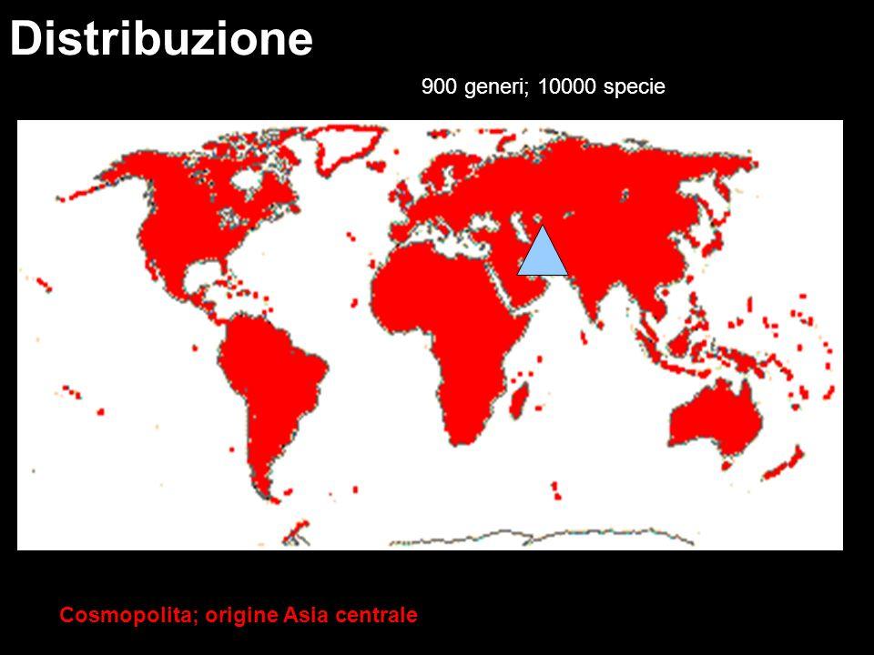 Cosmopolita; origine Asia centrale Distribuzione 900 generi; 10000 specie