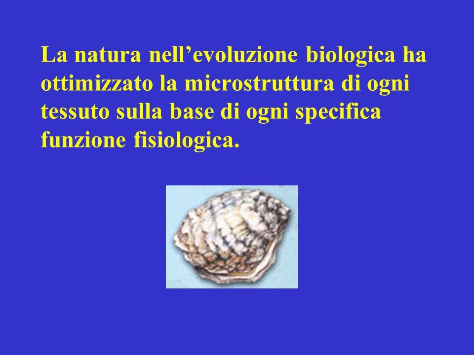 La natura nellevoluzione biologica ha ottimizzato la microstruttura di ogni tessuto sulla base di ogni specifica funzione fisiologica.