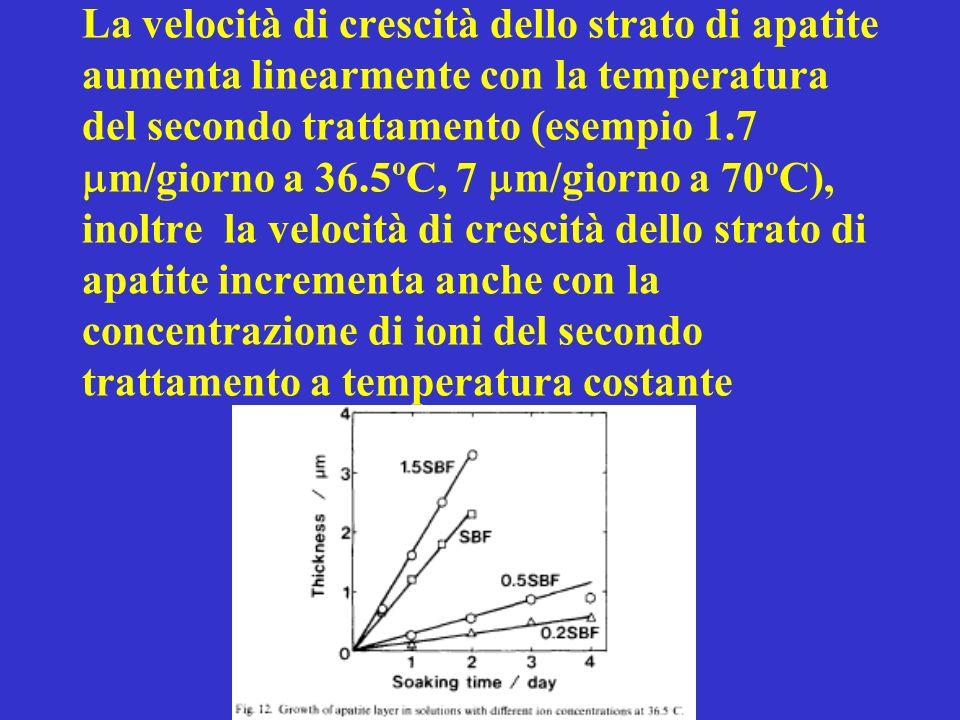 La velocità di crescità dello strato di apatite aumenta linearmente con la temperatura del secondo trattamento (esempio 1.7 m/giorno a 36.5ºC, 7 m/gio