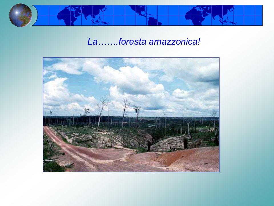 La biodiversità è la varietà delle forme viventi in un ambiente La biodiversità viene ridotta dallo sfruttamento indiscriminato delle risorse La biodi