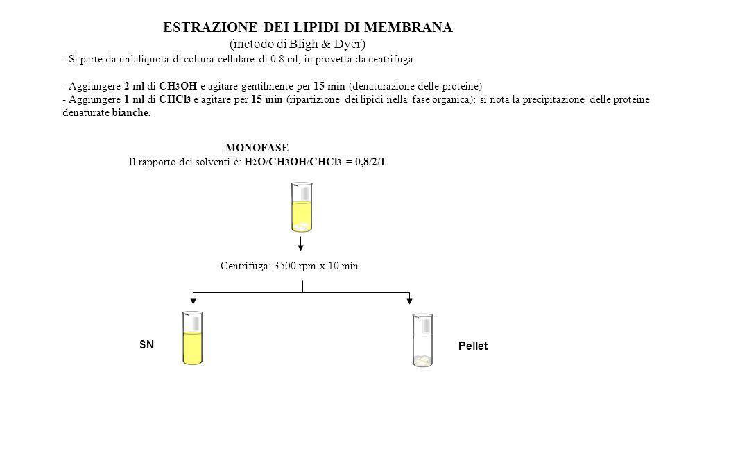 ESTRAZIONE DEI LIPIDI DI MEMBRANA (metodo di Bligh & Dyer) SN Pellet - Si parte da unaliquota di coltura cellulare di 0.8 ml, in provetta da centrifug