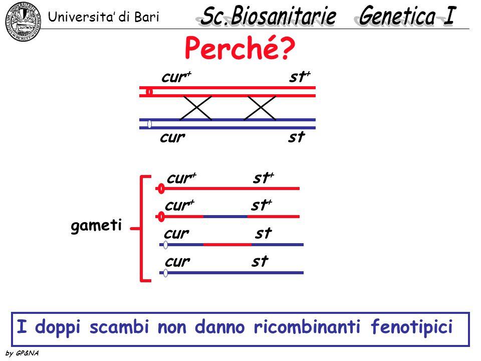 Perché? cur + st + cur st gameti cur + st + cur st cur + st + I doppi scambi non danno ricombinanti fenotipici Universita di Bari by GP&NA