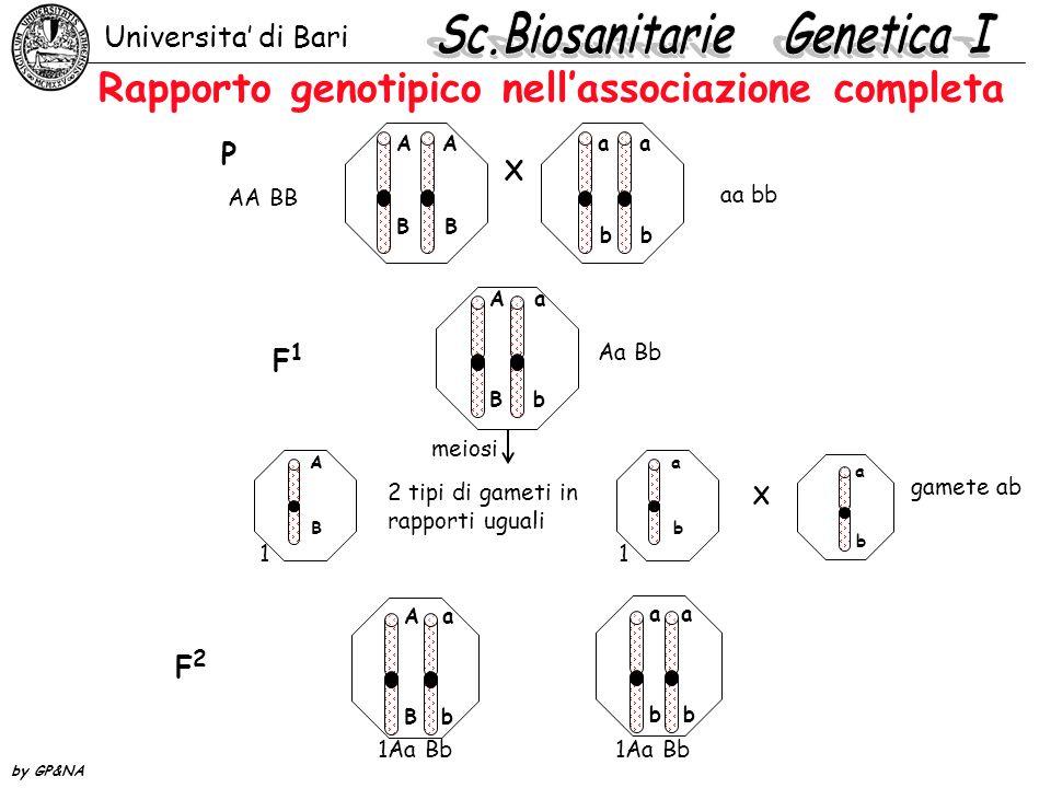 Rapporto genotipico nella associazione parziale Universita di Bari by GP&NA AA BB a a bb X P F1F1 AA BB Aa Bb aa bb Aa Bb A B a b A b a B a b meiosi 4 tipi di gameti in rapporti non uguali 80% parentali20% ricombinanti gamete ab X A B a b A b a B a b a b a b a b 4AB 4ab1Ab1aB F2F2 : : :