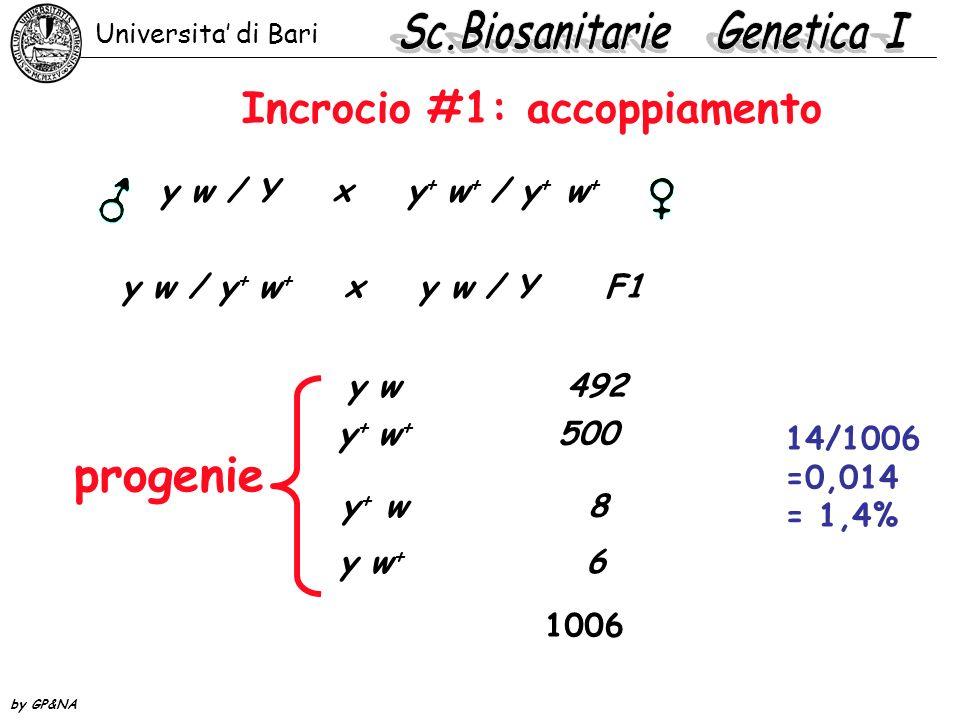 Incrocio #2: repulsione y + w / Y x y w + / y w + y + w / y w + x y w / Y F1 progenie y w 13 y + w + 17 y + w 980 y w + 1020 2020 30/2020 =0,015 = 1,5% Universita di Bari by GP&NA