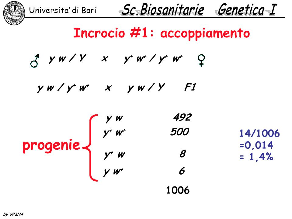 incrocio a 3 punti A BC abcabc tutti i possibili gameti A B C a bc parentali 1 2 crossing over #1 A b c a B C crossing over #2 A Bc a b C crossing over 1+2 A bC a B c Universita di Bari by GP&NA