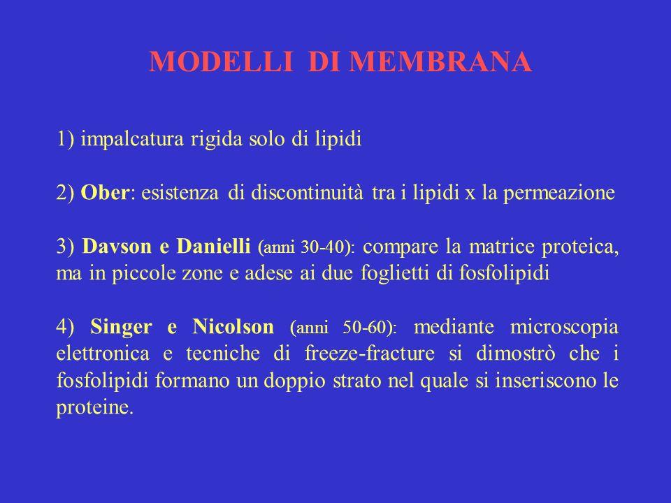 MODELLI DI MEMBRANA 1) impalcatura rigida solo di lipidi 2) Ober: esistenza di discontinuità tra i lipidi x la permeazione 3) Davson e Danielli (anni