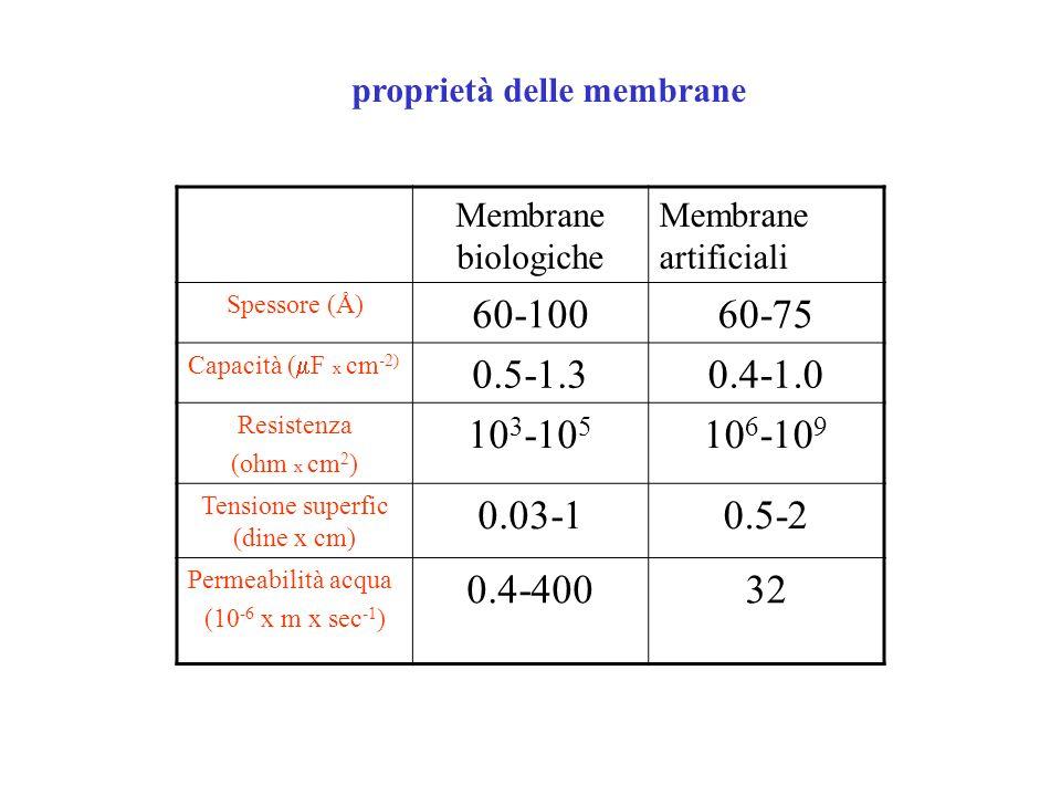 proprietà delle membrane Membrane biologiche Membrane artificiali Spessore (Å) 60-10060-75 Capacità ( F x cm -2) 0.5-1.30.4-1.0 Resistenza (ohm x cm 2