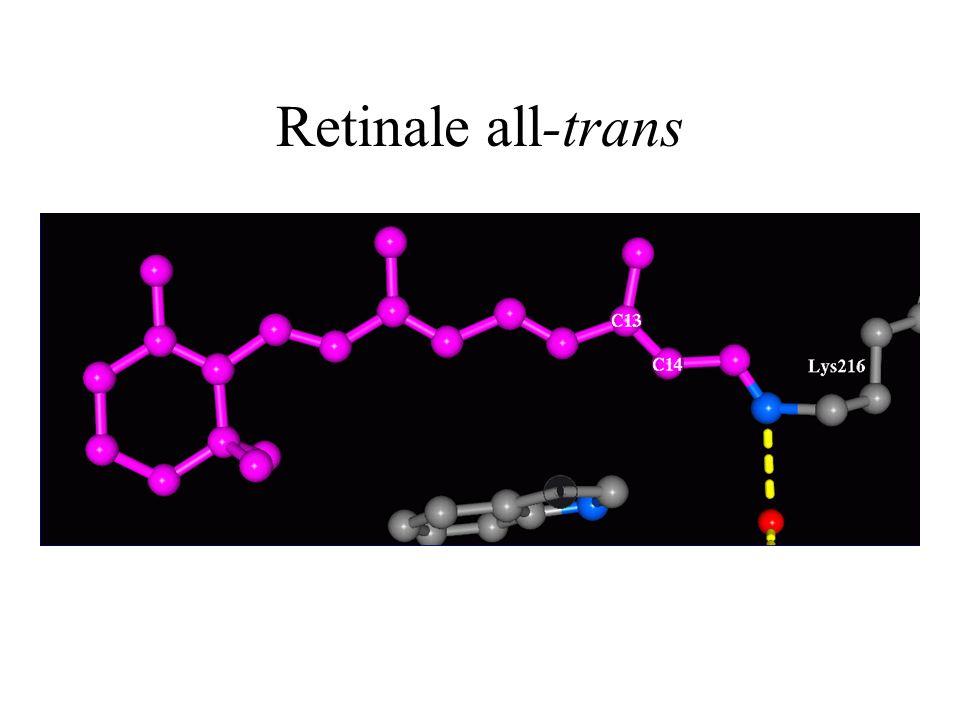 Retinale all-trans