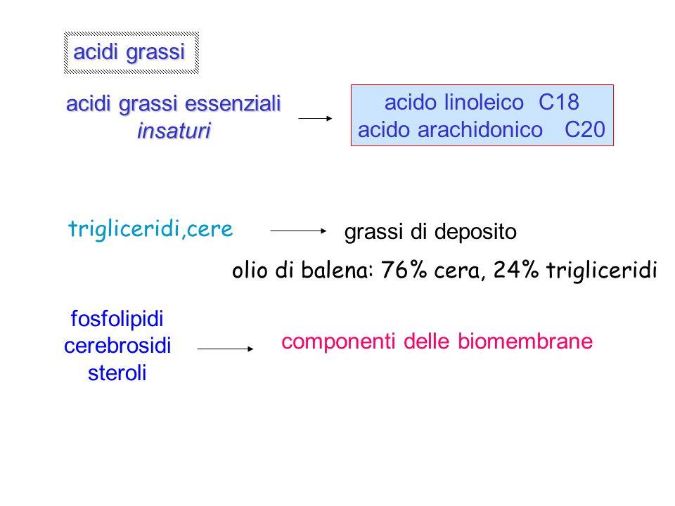 acidi grassi essenziali insaturi acido linoleico C18 acido arachidonico C20 trigliceridi,cere grassi di deposito fosfolipidi cerebrosidi steroli compo